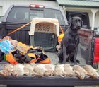 Late season rabbit hunt. Zeke the lab had a nice day working the thickets and made some handy retrieves.