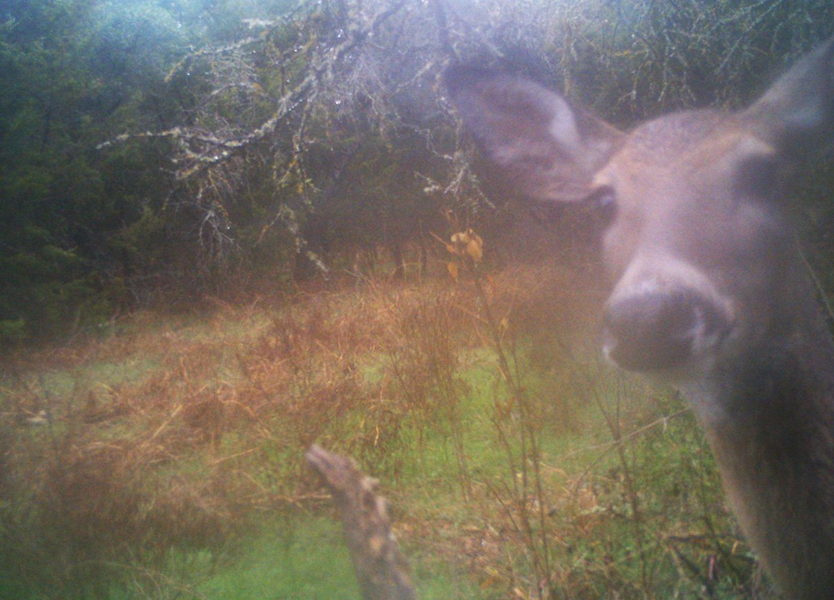 trail camera deer scouting