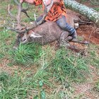 Massive red stag the old boy got yesterday. Weighed in at 192kg (423lbs)